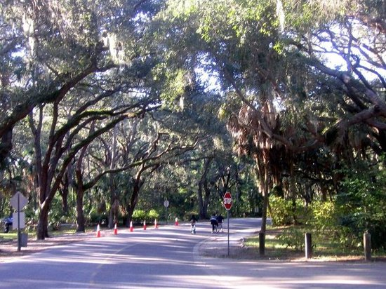Philippe Park: The main oak tree canopy road