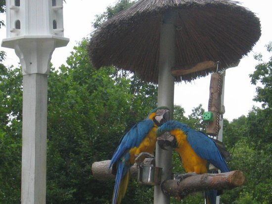 Beautiful flowers picture of parrot mountain gardens for Mountain flower cabin pigeon forge