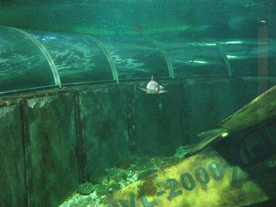 Grand Aquarium de Touraine : Requin !