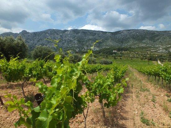 Montagne Sainte Victoire: Vinhedos