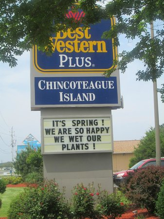 Best Western Chincoteague Island: Hotel play on words.