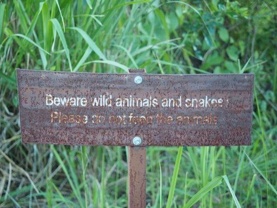 Kyambura Gorge Lodge: Remember you are in the wild :)