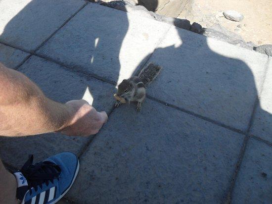 Broncemar Beach : feeding chipmunks