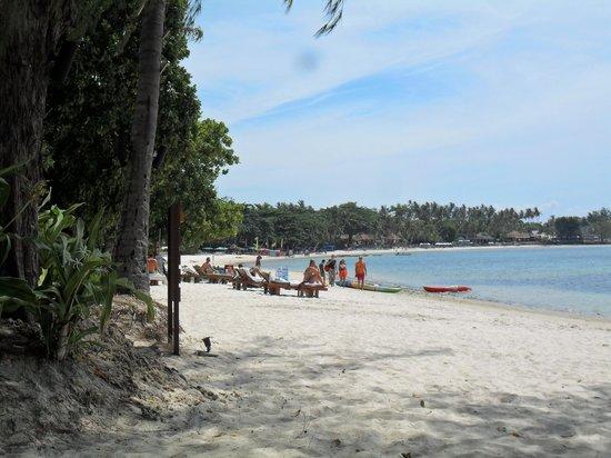 Amari Koh Samui: strand bij het hotel, ruimte en rust