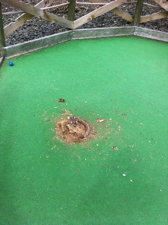 M & D's Scotlands Theme Park: broken post holes