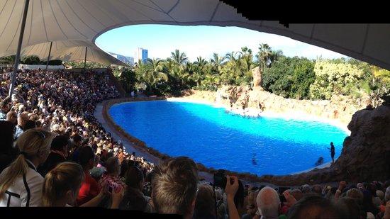 Loro Parque : The Dolphins