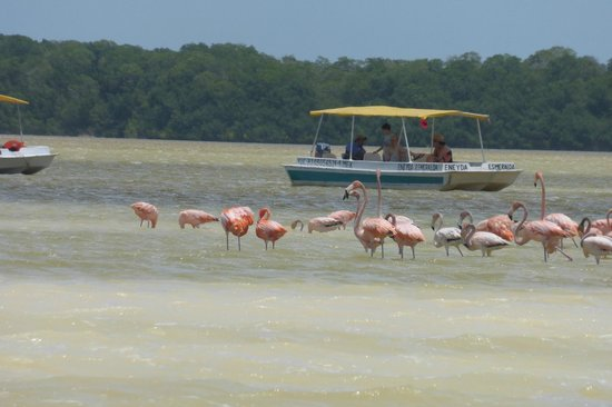 Celestun Wildlife Refuge : More Flamingos
