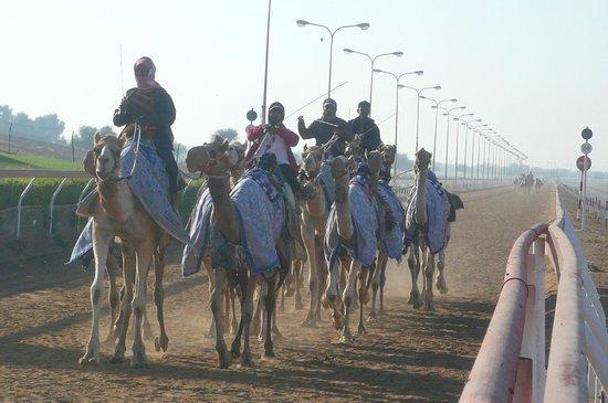 Al Sawan Camel Track : Une course d'entraînement