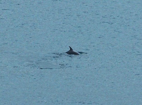 Tide's Reach Bed & Breakfast: Dolphins visit us regularly in the summer - this picture was taken from our se view room Moranne