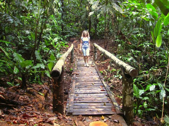 Samasati Retreat & Rainforest Sanctuary: Bridge in the forest, going to the swimming pool