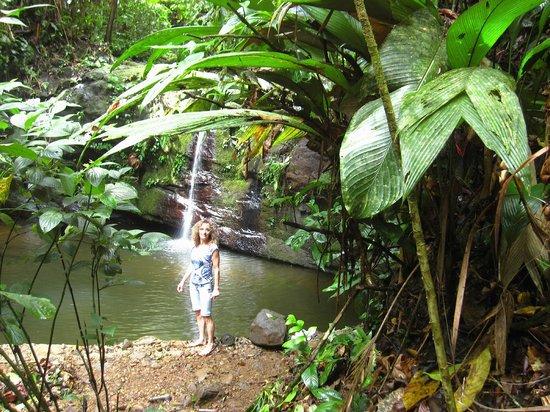 Samasati Retreat & Rainforest Sanctuary: Natural swimming pool