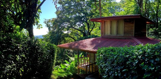 Samasati Retreat & Rainforest Sanctuary: Bungalow nestled in the Forest, overlooking the Caribbean, photo by Henry Rowland