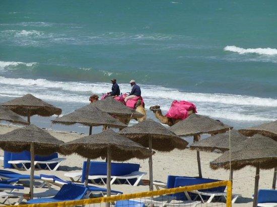SENTIDO Djerba Beach : zin in een ritje op een kameel?