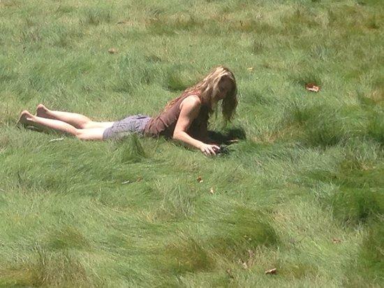 Cavallo Point : Beautiful grass