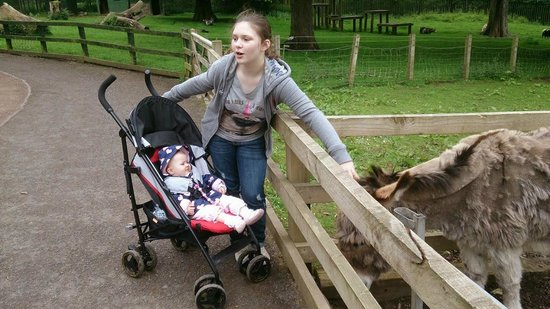 Camperdown Wildlife Centre: Caitlin & Kayla making friends with the friendly Donkey.