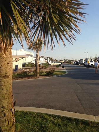 Destin West RV Resort : View of one row of sites