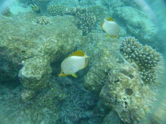 Thulhagiri Island Resort: риф