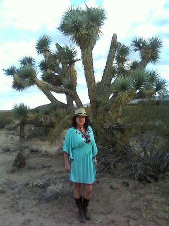 Stagecoach Trails Guest Ranch: junto a un árbol de Joshue