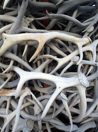 Town Square: Close-up of the antlers