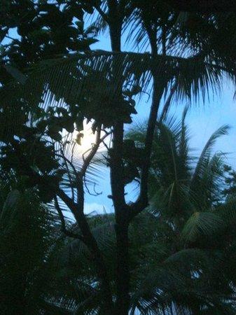 La Leona Eco Lodge: Palms in the garden