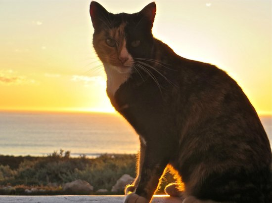 Abalone House & Spa : The Home's cat