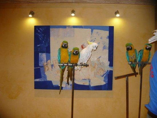 Hotel RH Corona del Mar: esperando que empieza el spectaculo