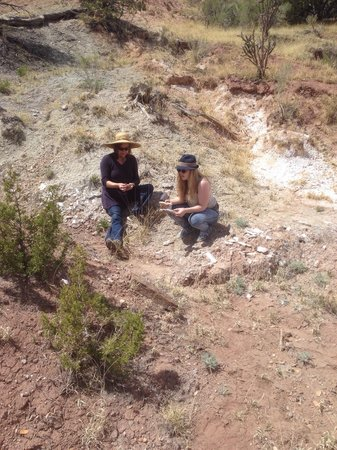 New Mexico Jeep Tours: Looking for geological wonders.