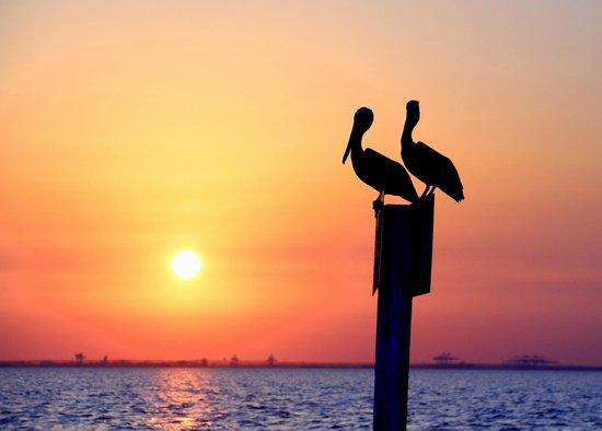 WildNative Delta Safaris: Pelicans at sunset.