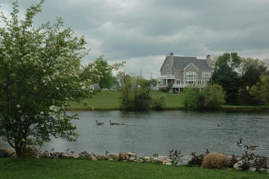 Pheasant Field Bed & Breakfast : Lovely pond