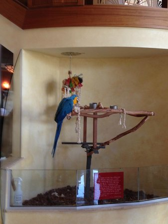 Clearwater Beach Marriott Suites on Sand Key: Hotel Lobby Pet Bird