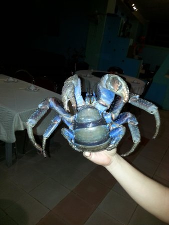 Santo Chinese Restaurant: coconut crab in the living