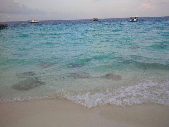 Jumeirah Vittaveli: beach
