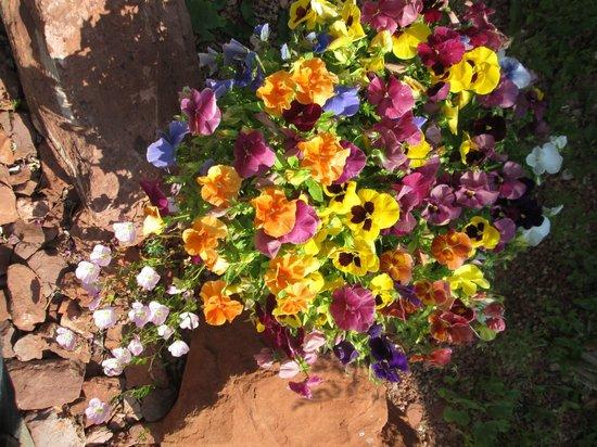 Adobe Grand Villas: Beautiful flowers everywhere.