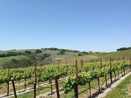Calcareous Vineyard: winery