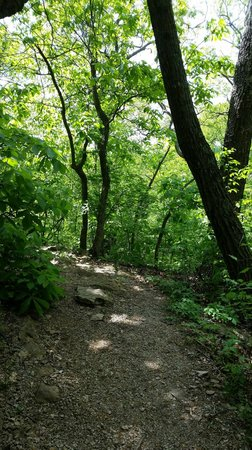 Burr Oak Woods Conservation Area