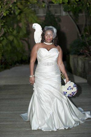 Jungle Island: Pretty parrot, blushing bride