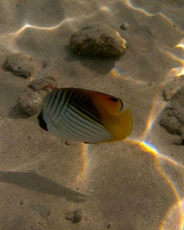 Hanauma Bay Nature Preserve: Threadfin Butterfly
