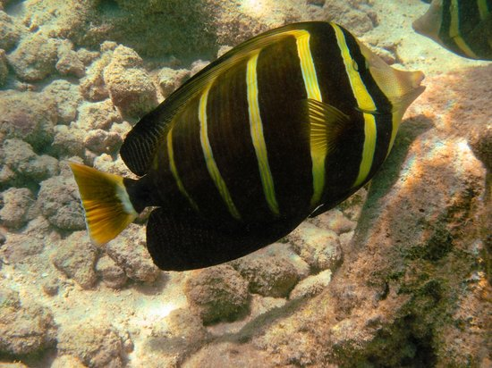 Hanauma Bay Nature Preserve: Pez Mariposa