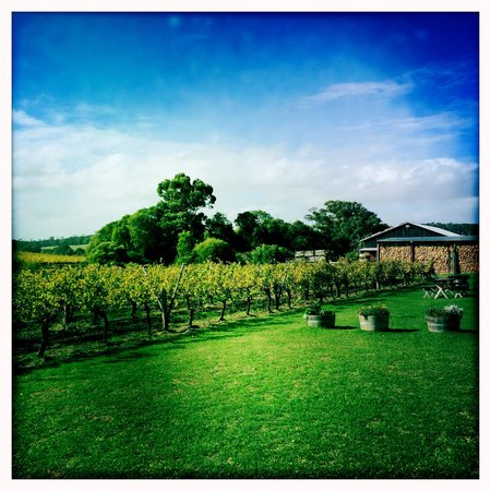 Cullen Wines - Cullen Restaurant: The grounds.....