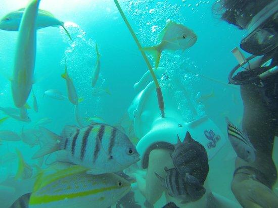 Sea Trek St. Maarten : Merveilleux