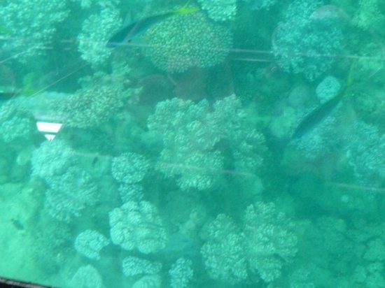Green Island : Coral as seen from the glass-bottom boat