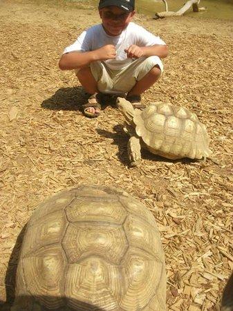 Harmony Park Safari : My son & a tortoise