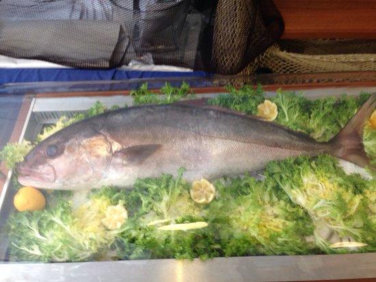 La Fraschetta del Pesce: ricciolina