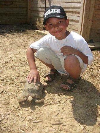 Harmony Park Safari : Tortoises