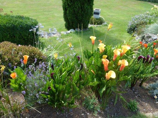 Kamahi Cottage : Calla lilies