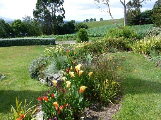 Kamahi Cottage : Liz's beautiful gardens