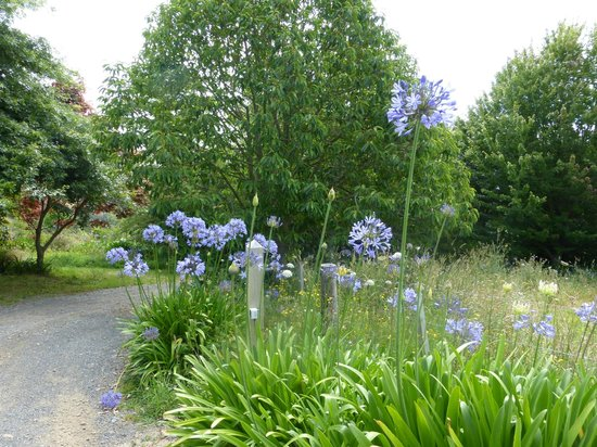 Kamahi Cottage: agapanthus on the driveway to the cottage