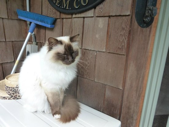 Kamahi Cottage: Coco the cat