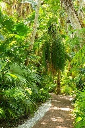 Sarasota Jungle Gardens: Example of shade you'd find throughout