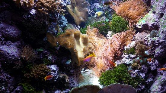 Shedd Aquarium : Loved this...